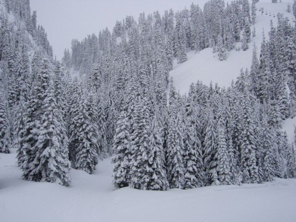 30cm of fresh powder at Mt. Baker!